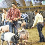 County extension hosts swine show contest