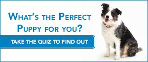 Puppy Quiz 2015