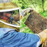 Preparing for winter and beekeeping chores