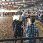 2016 Cape Fear Farm Credit Heifer Showdown held