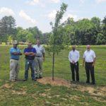 Smithfield donates trees to city