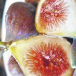 Lush and ripe