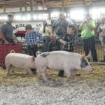 Sampson County Extension improves Livestock Arena