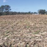 Sampson County farmers recovering from storm