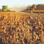 Sampson soybean production among top in state
