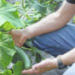 Black River Organic Farm enjoys organic traditions
